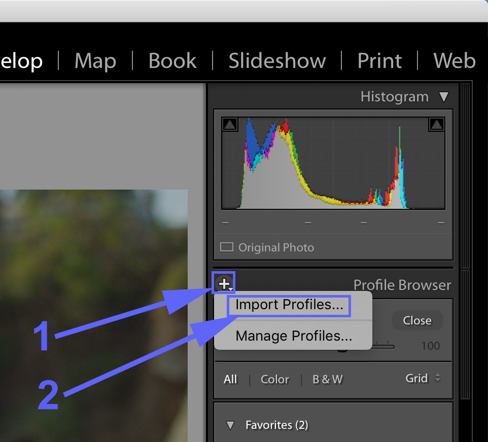 Lutify me | How to install Lutify me LUTs in Adobe Photoshop